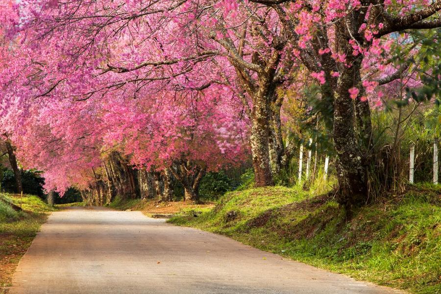 ทุ่งดอกไม้ ในประเทศไทย